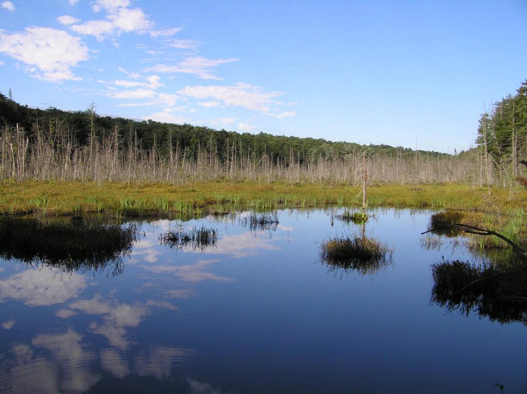 Swamp, Adirondacks, NY