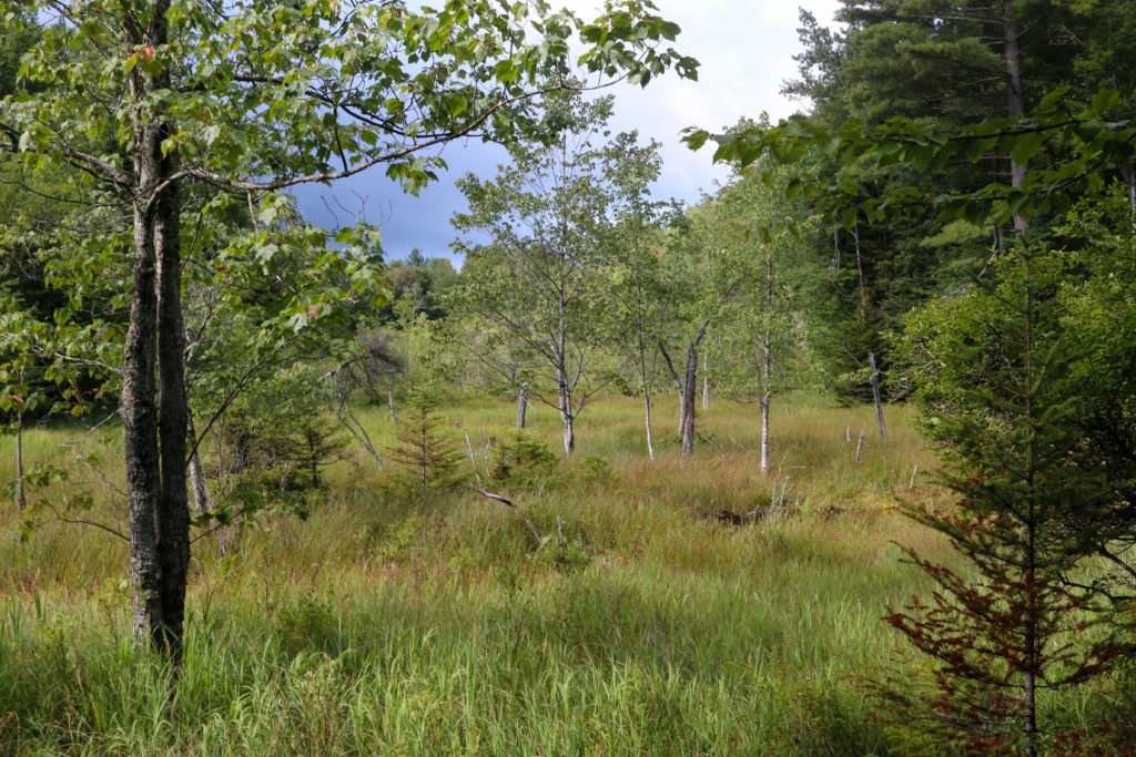 Swamp, Adirondacks